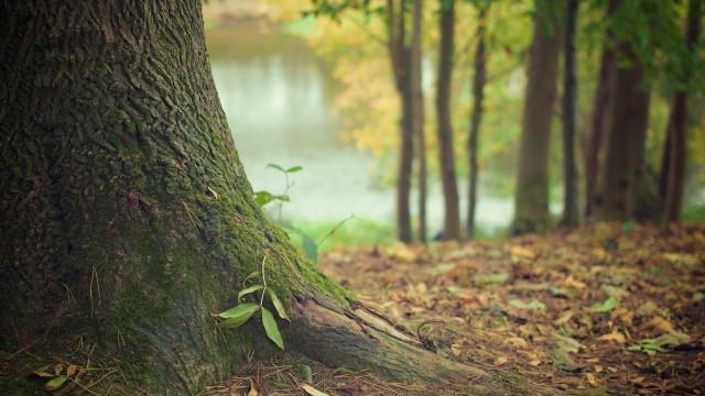 Ein Baumstamm mit Walboden und Bäumen im Hintergrund